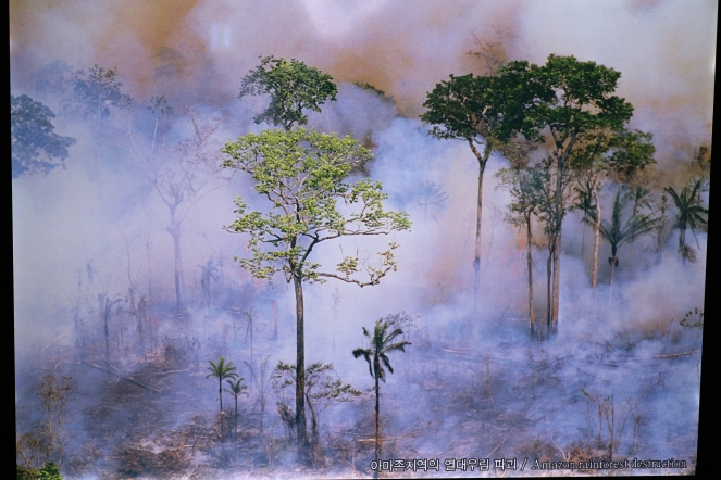 Deforestation of Amazon Rainforest
